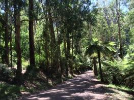 Dandenongs road